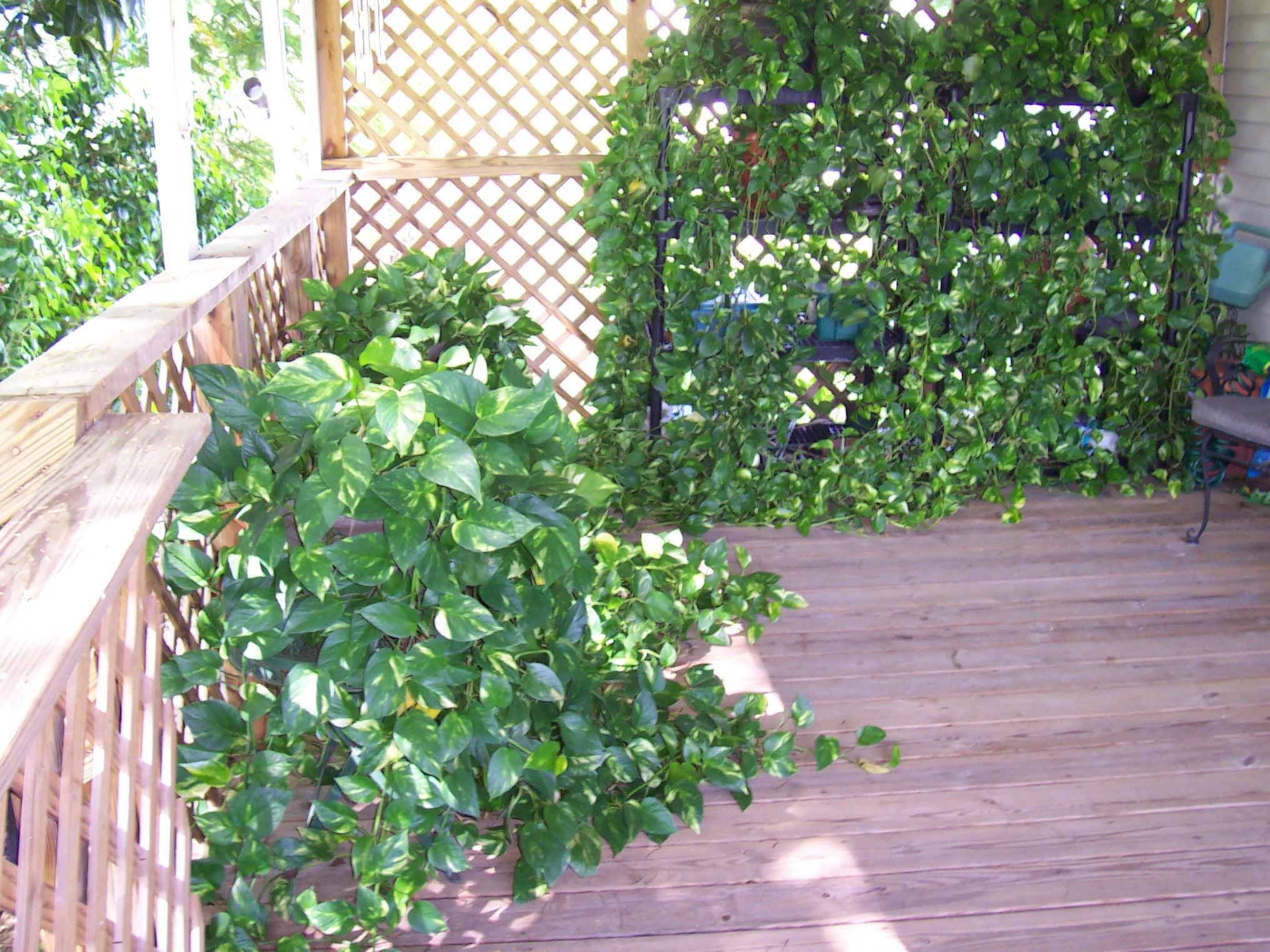 Mature plants for sale black ass pics for Garden decking norwich